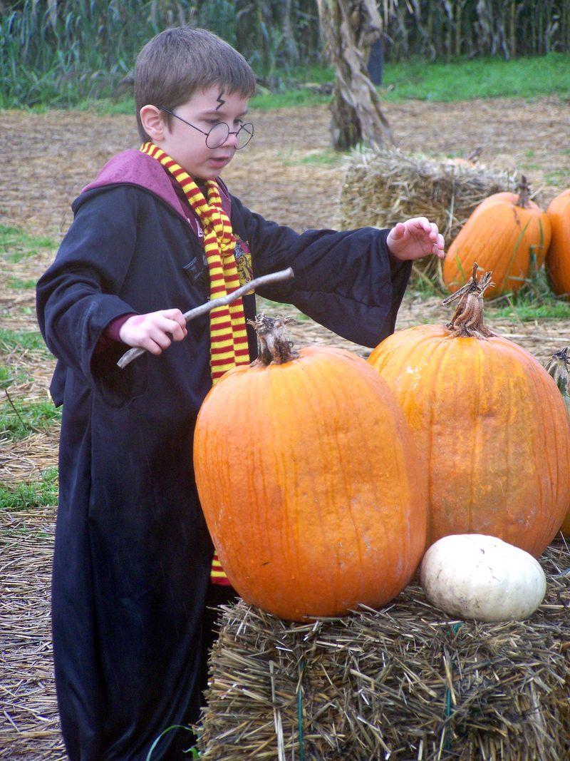 Pumpkin Patch 17